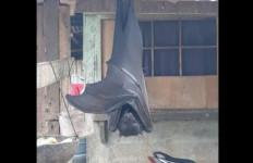 Mengerikan! Viral Foto Kelelawar Seukuran Manusia Bergantung di Rumah Warga - JPNN.com