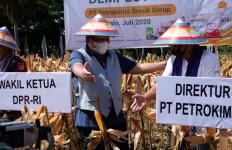 Petrokimia Gresik Genjot Produktivitas Pertanian di Gorontalo, Hasilnya Memuaskan - JPNN.com