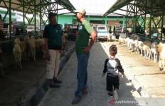 Berita Terbaru Seputar Hewan Kurban Dari Gunung Kidul - JPNN.com