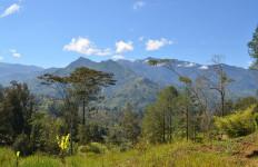 Perluas Areal Hutan, Tiongkok Makin Hijau - JPNN.com