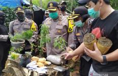 Banyak Pohon Ganja di Tengah Tanaman Pisang dan Sayuran di Bandung, Pemiliknya Ternyata - JPNN.com