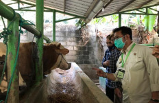 Jelang IdulAdha, Mentan Syahrul Pantau Ternak Hewan di Subang - JPNN.com