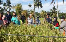 Petani Bondowoso Tanam Padi Lokal Untuk Penuhi Kebutuhan Pangan - JPNN.com
