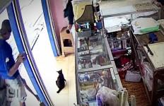 Kucing Hitam Ditendang, Diinjak Kepalanya, Menggelepar, Heboh! - JPNN.com