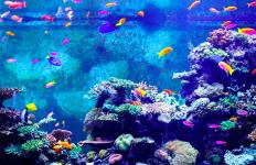 Ini Manfaat Ajaib Memelihara Ikan Hias di Aquarium - JPNN.com