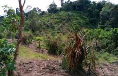 Kebun Sawit Warga di Aceh Jaya Hancur, Rumah Diubrak-abrik, Marnuddin Trauma - JPNN.com