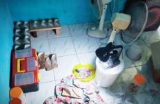 Sarang Burung Walet Putih Bersih, Setelah Diteliti Bikin Kaget - JPNN.com