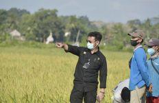 Antisipasi Kekeringan, Kementan Sarankan Petani Kulon Progo Asuransikan Lahan Pertaniannya - JPNN.com