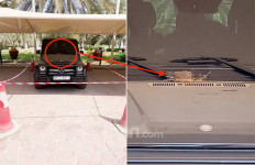 Tajir Melintir, Pria Ini Menjadikan Mobil Mewahnya Sarang Burung - JPNN.com