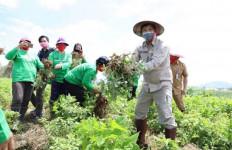 Terbukti, Sektor Pertanian dan Perkebunan Tetap Bertahan di Tengah Pandemi COVID-19 - JPNN.com