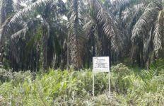 BKPM Sebut Investasi Asing Sektor Pertanian Didominasi Perkebunan Sawit - JPNN.com