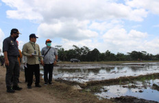Kementan Kebut Persiapan Food Estate, Pulang Pisau Bersiap Tanam - JPNN.com