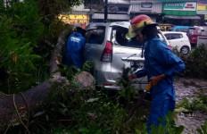 Puncak Bogor Diterjang Angin Kencang, Pohon Tumbang, Mobil Ringsek - JPNN.com