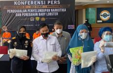 Bea Cukai Gagalkan Penyelundupan Narkotika dan Menegah Ekspor Benih Lobster - JPNN.com