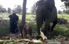 Alhamdulillah, Nia Melahirkan Anak Sehat Seberat 81 Kg - JPNN.com