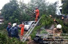 Sedan BMW Tertimpa Batang Pohon, Paryo: Rugi 35 Juta - JPNN.com