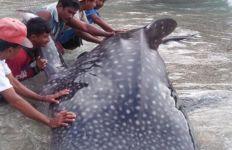 Lihat Foto Ini, Nelayan Tak Takut - JPNN.com