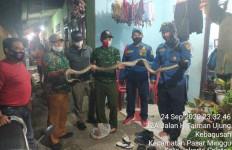 Tengah Malam Erwin Mendengar Ada yang Jatuh dari Kamar Mandi, Bikin Panik - JPNN.com