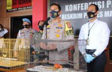 Polisi Tangkap Penjual Burung Tiong Emas, Berapa Harganya? - JPNN.com