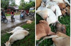 Belasan Ekor Lembu Mati Bergelimpangan Disambar Petir - JPNN.com
