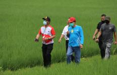 Mentan SYL Dorong Pengembangan Urban Farming di Jakarta - JPNN.com