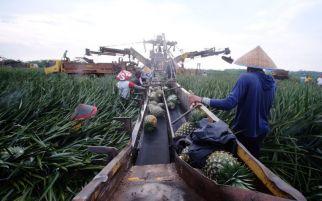Bea Cukai Maluku Kembangkan Kawasan Berikat Holtikultura