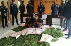 Polisi Temukan Ladang Ganja Seluas Satu Hektare di Bukit Barisan, Dua Pemuda Diringkus - JPNN.com