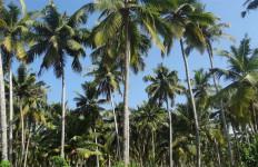 Tiba-Tiba Pohon Kelapa Tumbang di Dekat 4 Orang Anak, 3 Selamat - JPNN.com