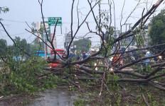Hujan Angin di Bekasi, Pengendara Motor Tertimpa Pohon Tumbang - JPNN.com