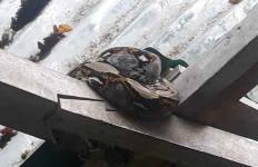 Lihat Foto Ini, Hiiii, di Atap Rumah - JPNN.com