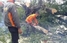 Pohon Tumbang Timpa Pengendara Sepeda Motor di Kota Bogor - JPNN.com
