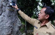 Bima Arya Ingatkan Warga Kota Bogor Kenali Ciri-ciri Pohon yang Rawan Tumbang - JPNN.com
