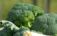 Ini Lho 7 Manfaat Super Brokoli, Salah Satunya Baik untuk Mata - JPNN.com