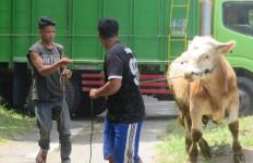 Nasib Sapi di Lereng Gunung Merapi - JPNN.com