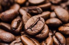 Jakarta Coffee Week 2020 Diadakan Secara Virtual - JPNN.com