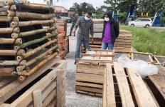 Demi Acara Ini, Pesawat Hercules TNI Angkut 59 Ekor Babi Hutan dari Ambon ke Timika - JPNN.com