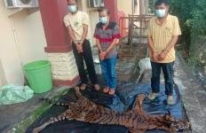 Polisi Tangkap Pelaku Perdagangan Kulit dan Organ Tubuh Harimau Sumatera, Nih Penampakannya - JPNN.com