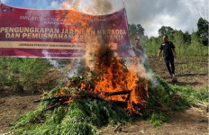 Bea Cukai dan Bareskrim Polri Amankan 284 Kilogram Ganja - JPNN.com