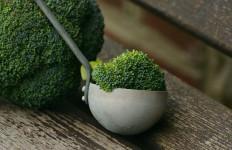 Lindungi Jantung, Ini 7 Manfaat Brokoli untuk Kesehatan - JPNN.com