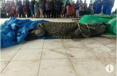 Nelayan Menangkap Seekor Buaya Muara Berukuran Besar, Nih Penampakannya - JPNN.com