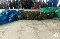 Muncul di Sekitar Pelelangan Ikan, Buaya Besar Ini Sontak Bikin Geger Warga, Nih Penampakannya - JPNN.com
