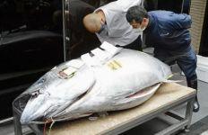Gokil, Ikan Tuna Sirip Biru Terjual dengan Harga Rp 2,7 Miliar - JPNN.com