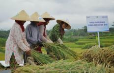 BRI Berdayakan Pengembangan Ekosistem Desa dan Produk Unggulan - JPNN.com