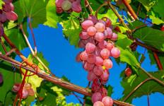 6 Jenis Buah dan Sayur Paling Kotor, Banyak Pestisida - JPNN.com