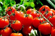 6 Manfaat Konsumsi Tomat Mentah yang Perlu Anda Ketahui - JPNN.com