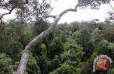 Selama 29 Tahun, KLHK Sebut Ada Penurunan Luas Hutan 62,8 Persen di DAS Barito Kalsel - JPNN.com