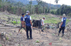 Harimau Sumatera Teror Warga Mukomuko - JPNN.com