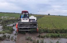 Ratusan Hektare Padi di Food Estate Pulang Pisau Segera Dipanen - JPNN.com