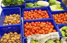 Kementan Dukung Pilot Project Closed-Loop untuk Menghasilkan Produk Hortikultura Berkualitas - JPNN.com