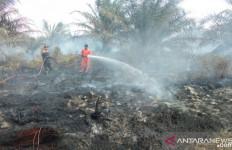 Waduh, Lahan Kelapa Sawit Kembali Terbakar di Agam - JPNN.com